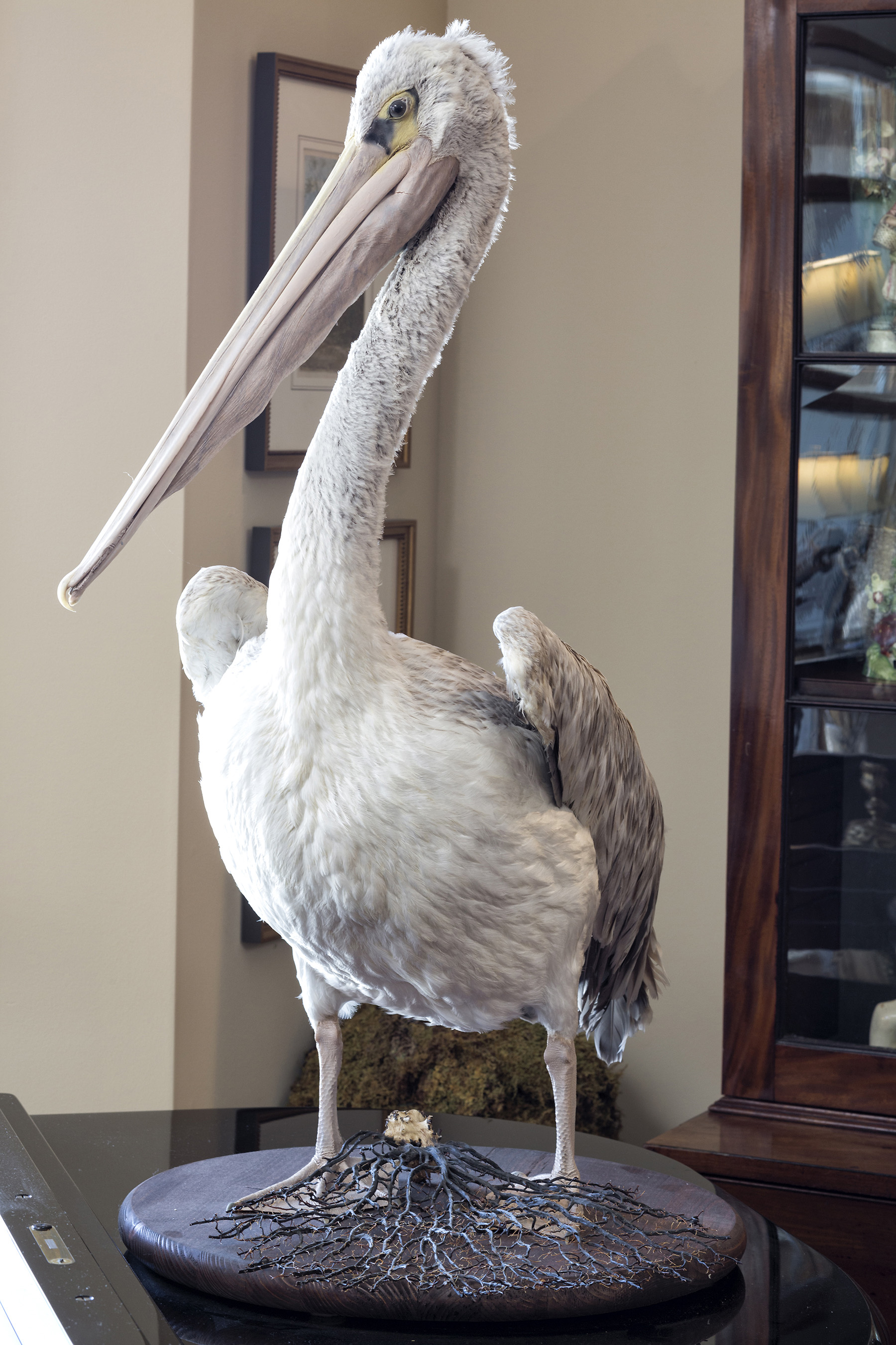 stuffed pelican in a collector's home